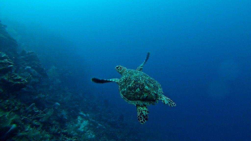 Praias de Honduras: descubra quais as melhores para curtir o verão